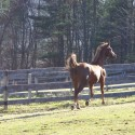 """Galloping Horses"" Tired of Snow? Green Images, Good Music"