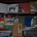1 Author, 3 Horses, Thoroughbreds,Lippitt Morgans and Me
